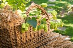 Hopfen und Gerste mit Weizen im Weidenkorb Stockbild