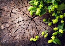 Hopfenzweig über altem hölzernem gebrochenem Hintergrund Bierherstellungsbestandteil brauerei Stockfotografie
