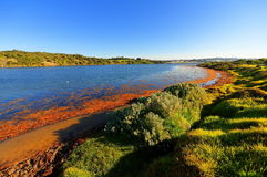 Hopkins river Stock Images