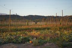 Hoplandbouwbedrijf in de herfst Stock Foto's