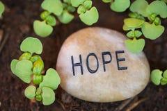 Hopp för ny tillväxt Arkivfoton