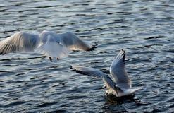 Hopp på havet arkivfoton