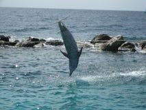 hoppa för delfin Arkivbilder