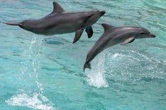 hoppa för delfiner Royaltyfri Bild
