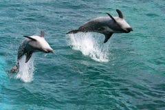 hoppa för delfiner Arkivbilder