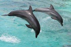 hoppa för delfiner royaltyfri foto