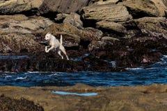 hoppa för hund arkivbild