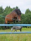 hoppar ponnyn Arkivfoto