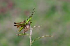 A hopper Stock Image
