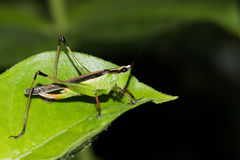 Hopper Royalty Free Stock Images