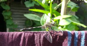 Hopper. A hopper is taking rest on a cloth in sun shine royalty free stock photography