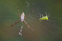 Hopper in the web Royalty Free Stock Photos
