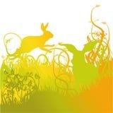 Hopping κουνελιών στο χορτοτάπητα Στοκ Φωτογραφίες