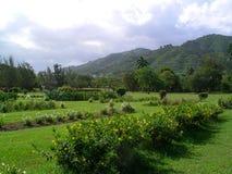 Hoppträdgårdar framme av kullar Arkivfoto