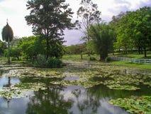 Hoppträdgårdar, Kingston, Jamaica royaltyfri fotografi