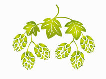Hops. Stylized hop cones and leaves Stock Image