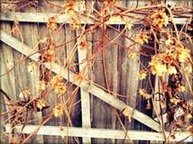hops Foto de Stock