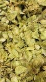 hops Imagem de Stock Royalty Free
