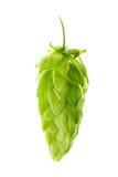 hops fotografia de stock royalty free