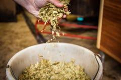hops Imagens de Stock Royalty Free