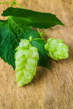 Hops background of the old board stock image