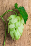 Hops  background of the old board Royalty Free Stock Images
