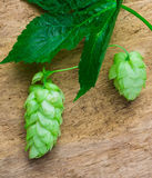 Hops  background of the old board Royalty Free Stock Photos