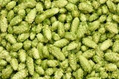 Hops background. Stock Image