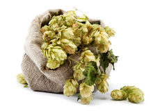Hops in a bag. Royalty Free Stock Photos