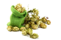 Hops in a bag. Stock Image