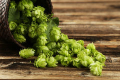 Hops in basket on brown wooden background. Royalty Free Stock Image