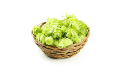 Hops in basket isolated on white Royalty Free Stock Images