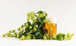 Hops and beer. Still life with flowers and a glass of beer hops Royalty Free Stock Photos