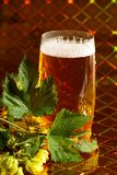 Hops and beer royalty free stock images