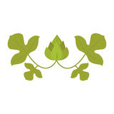 Hops beer green plant alcohol nature agriculture vector illustration. Royalty Free Stock Image