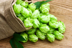 Hops in Burlap Bag on Wood Stock Image