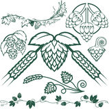 Hops Collection Stock Photography