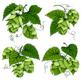 Hops designs set Royalty Free Stock Photo