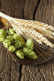 Hops and Ears of Grain Royalty Free Stock Photo