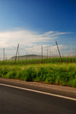 Hops farm Stock Image