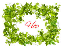 Hops frame of leaf and cone for brewery design. Hops plant green branches with leaf and cone arranged into frame with copy space in center for beer label Stock Photography