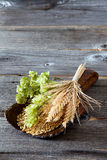 Hops, grain and cereal ears Stock Photography