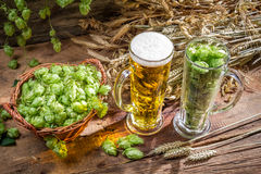 Hops and grains as ingredients for beer Royalty Free Stock Photo