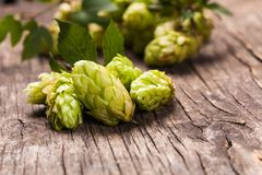 Hops heap. Hops with green leaf on a wooden background Royalty Free Stock Image