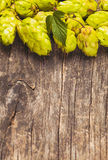 The hops heap Royalty Free Stock Photos