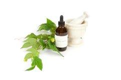 Free Hops Herbal Tincture, Humulus Lupulus. Royalty Free Stock Photos - 15750878