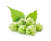 Hops (humulus) Stock Photos