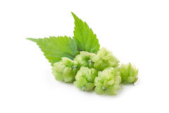 Hops (humulus) Royalty Free Stock Photography