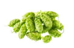 Hops Stock Image
