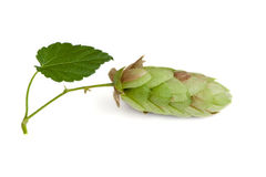 Hops with leaf Royalty Free Stock Images